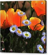 Spring Flowers In Payson Arizona Acrylic Print