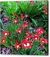 Spring Flowers Acrylic Print by Joyce Woodhouse