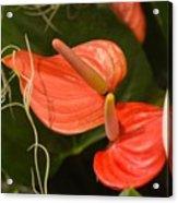 Spring Flowers No.8 Acrylic Print