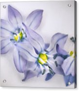 Spring Flowers On White Acrylic Print