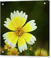 Spring Flowers Shell Road Acrylic Print