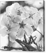 Spring Flowers - White Acrylic Print