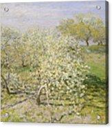 Spring. Fruit Trees In Bloom Acrylic Print