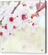 Spring Glory 1 Acrylic Print