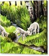 Spring Grasses Acrylic Print
