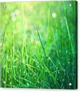Spring Green Grass Acrylic Print