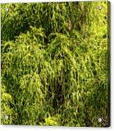 Spring Greens Acrylic Print