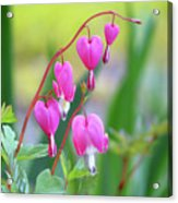Spring Hearts - Flowers Acrylic Print