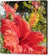 Spring Hibiscus Acrylic Print