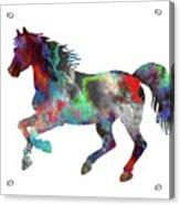 Spring Horse 2 Acrylic Print