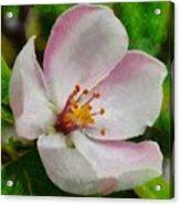 Spring - Id 16235-142747-0642 Acrylic Print