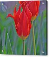Spring Impression Acrylic Print