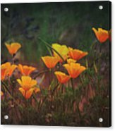 Spring In A Poppin' Acrylic Print