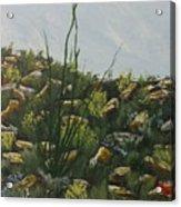Spring In Borrego Acrylic Print