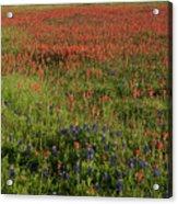 Spring in Central Texas Acrylic Print