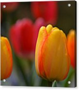 Spring In Colors Acrylic Print