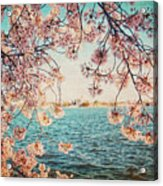 Spring In Dc Acrylic Print