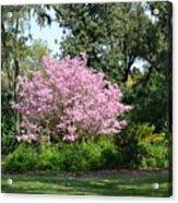Spring In Florida Acrylic Print