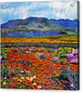Spring In Namaqualand Acrylic Print