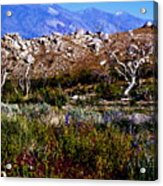 Spring In Onion Valley Acrylic Print