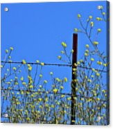 Spring In The Country Acrylic Print