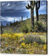 Spring In The Desert  Acrylic Print