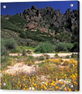 Spring In The Pinnacles Acrylic Print by Kathy Yates