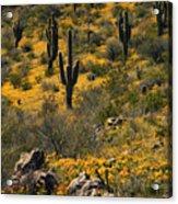 Spring In The Sonoran Desert  Acrylic Print