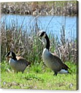 Spring In The Wetlands Acrylic Print