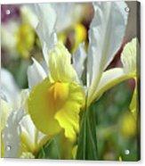 Spring Irises Flowers Art Prints Canvas Yellow White Iris Flowers Acrylic Print