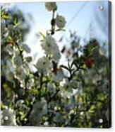 Spring Is Coming Acrylic Print