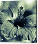 Spring Is Coming - Monochrome Acrylic Print