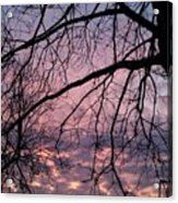 Spring Is On The Way Acrylic Print