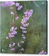 Spring Is Weeping Acrylic Print