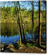 Spring It The Woods Acrylic Print