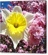 Spring Landscape Pink Tree Blossoms Yellow Daffodils Baslee Troutman Acrylic Print