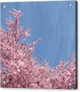 Spring Landscape Pink Trees Blossoms Blue Sky Baslee Troutman Acrylic Print