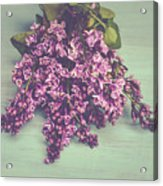 Spring Lilacs Acrylic Print