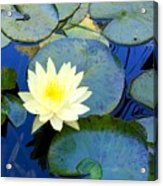 Spring Lily Acrylic Print