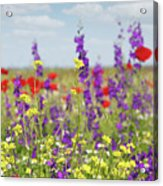 Spring Meadow With Flowers Nature Scene Acrylic Print