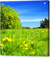 Spring Meadow With Green Grass Acrylic Print