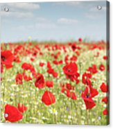 Spring Meadow With Wild Flowers Acrylic Print