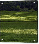 Spring Meadows Of Wildflowers Acrylic Print