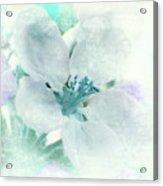 Spring Mood Acrylic Print