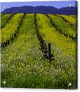Spring Mustard Field Acrylic Print