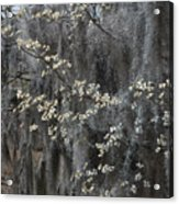Spring Mystery Acrylic Print