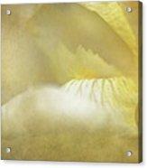 Nectar Of Spring Acrylic Print