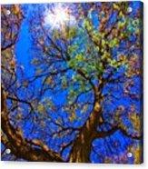Spring Oak Acrylic Print