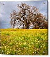 Spring Oak Tree And Wildflowers Acrylic Print