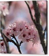 Spring On The Air Acrylic Print